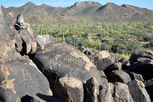 Signal Hill, West Tucson Mountain District, Saguaro National Park