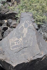 Macaw Petroglyph, Boca Negra Canyon, Petroglyph National Monument